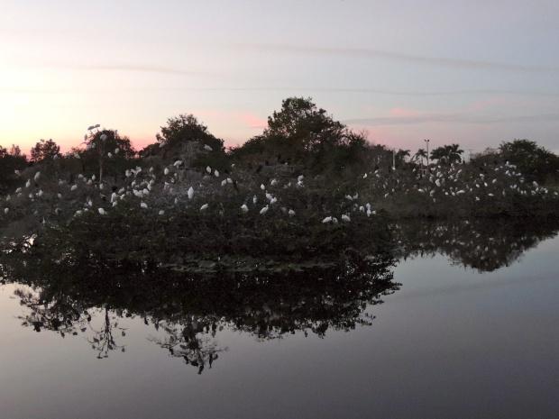 Bird blossom trees