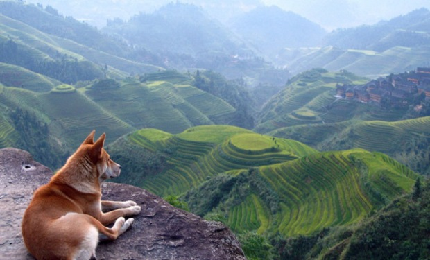 dog looking a valley