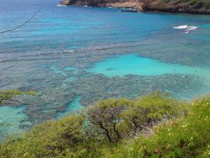 Hawaii 1330