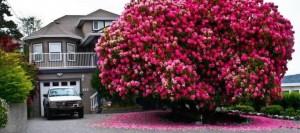 ARVORE 1As-16-árvores-mais-magníficas-do-mundo-720x320