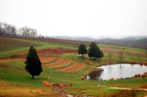 Vineyard at Stone Tower Winery